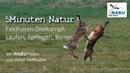 NABU-Natur: Feldhasenbalz im NSG-Zachariassee