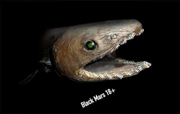 Гофрированная акула