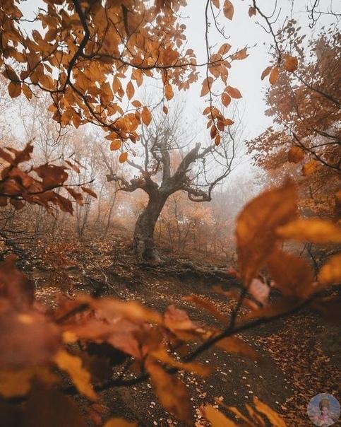 Осень на пороге