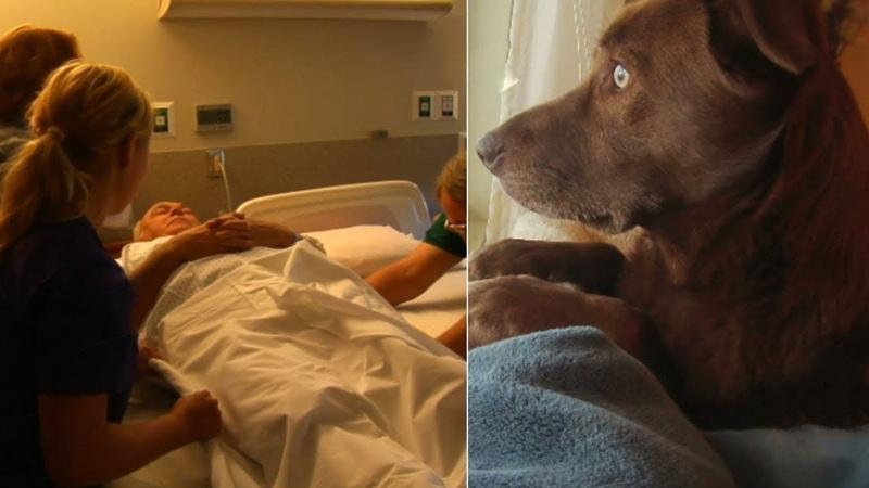 Момент, в который собака в последний раз сказала своему хозяину прощай, невероятно душещипательный