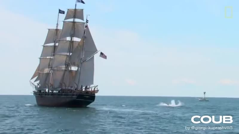 173 Year Old Whaling Ship Returns to Save Whales National Geographic