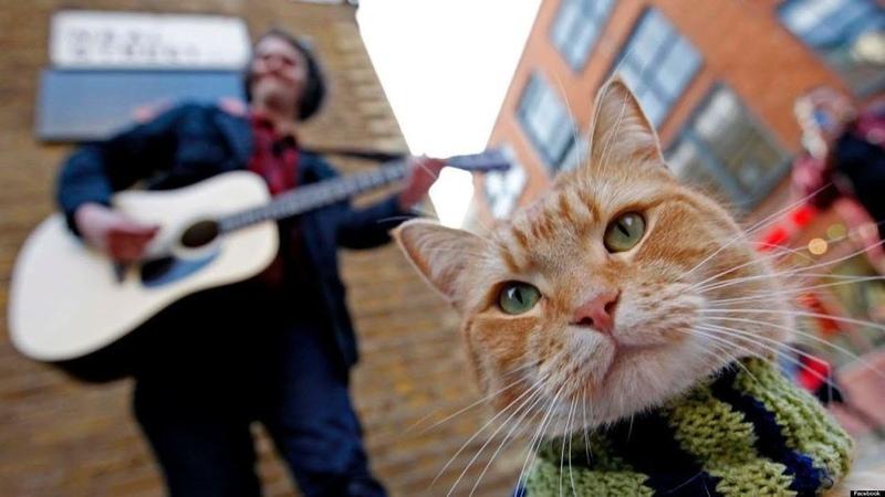 Уличный кот по кличке БобHD2016