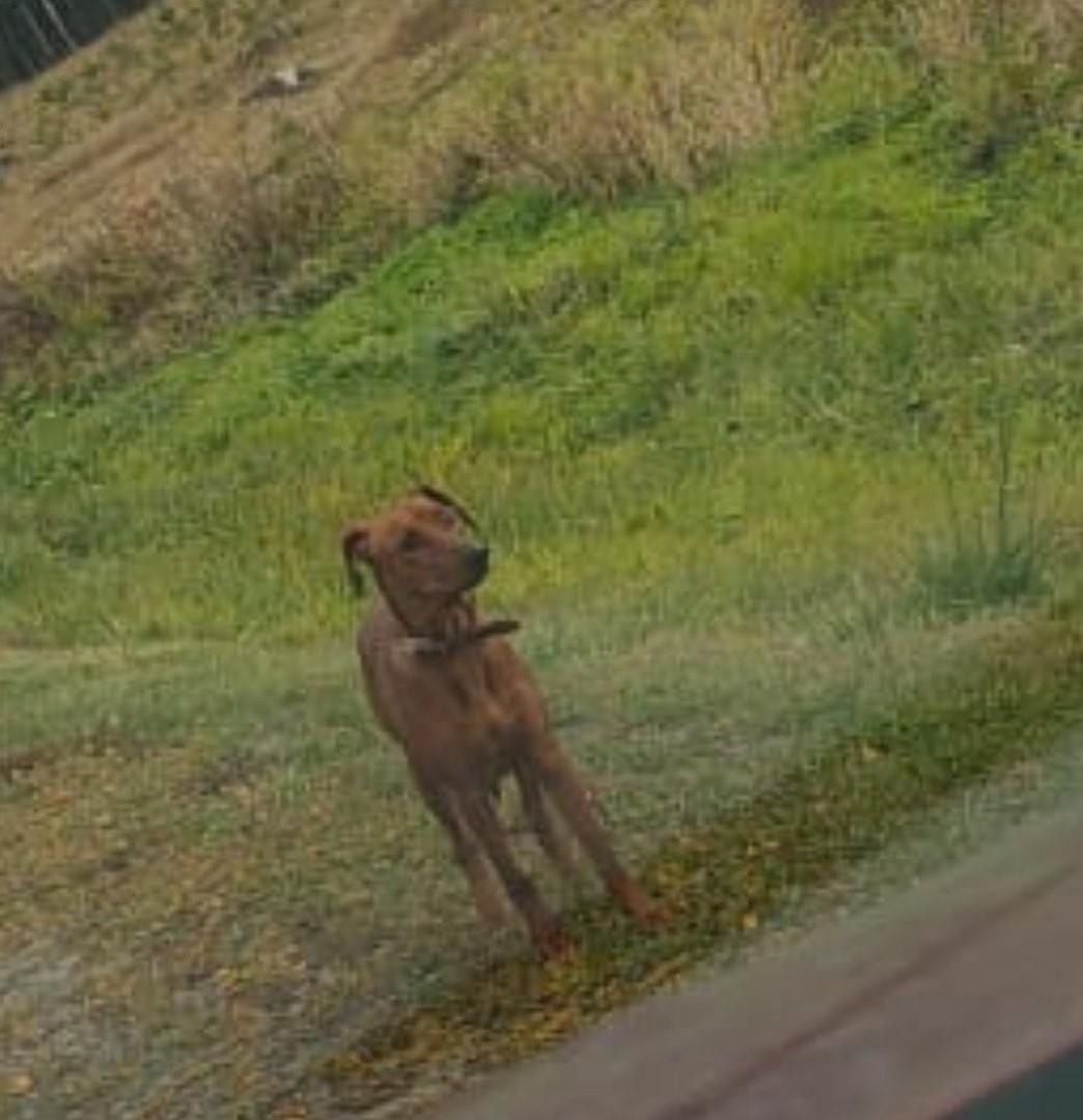 Срочно!!! Видели бежащим  по дороге ведущей