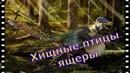 Доисторические хищники Хищные птицы ящеры