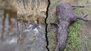 Охота 254 загонная на лося