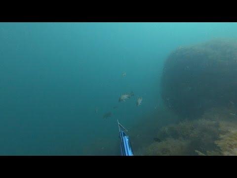В три захода! Подводная охота на горбыля.