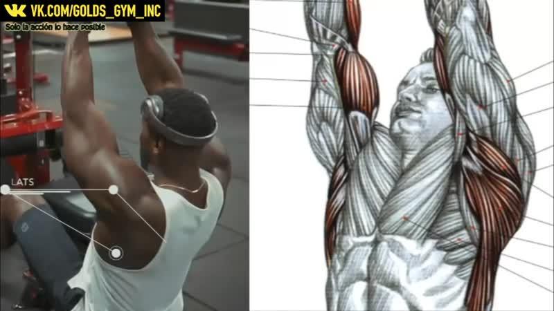 12 упражнений для роста твоей спины