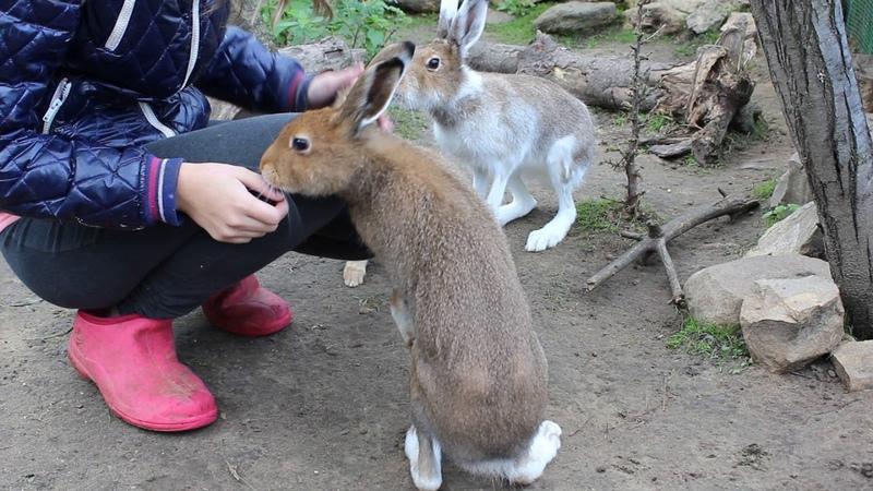 Просто... немного общительных зайцев