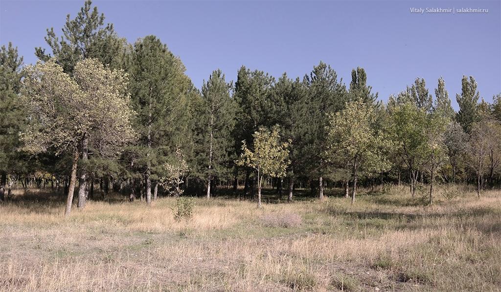 Вид на парк с пустыря, Бишкек 2019