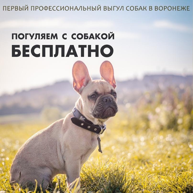 Кейс: продвижение стартапа по выгулу собак, изображение №22