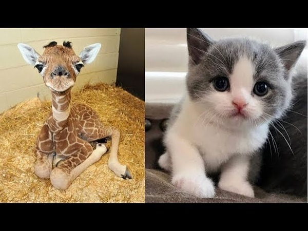Cute baby animals Videos Compilation cute moment of the animals Soo Cute 23