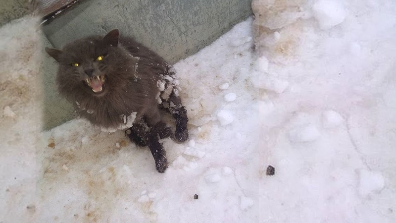 Rescue Poor Cat Was Crushed Lying Still Under The Cold Snow