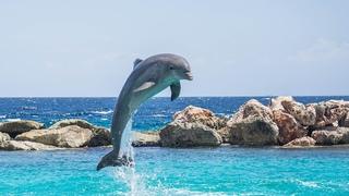Что нельзя делать при встрече с дельфином