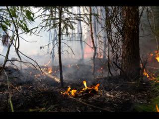 Оперативна інформація щодо загорання сухої трави та лісового масиву на території