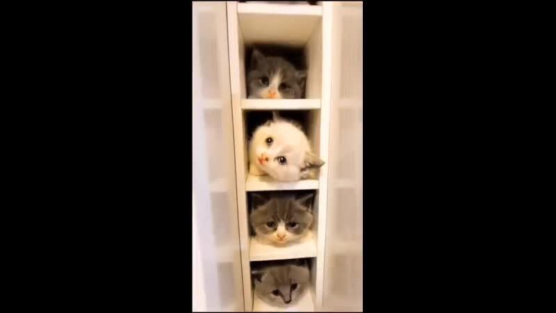 Если бы у каждого был такой шкафчик то люди были бы добрее