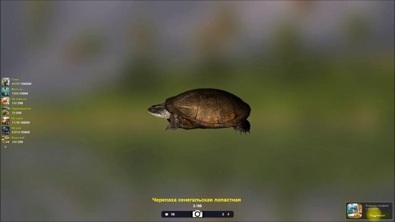 Черепаха сенегальская лопастная, квест черепахолов в игре Trophy Fishing 2