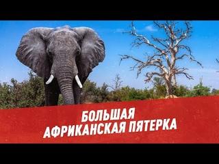 """Слон, буйвол, лев, леопард и носорог: как """"собрать"""" большую африканская пятерку - Отпуск каждый день"""