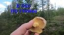 Таёные тропы Якутии неминуему ведут к грибным местам. Или чудесное путешествие в природу!