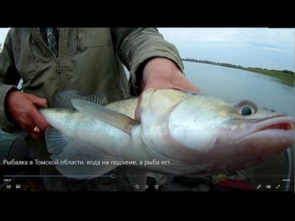 Рыбалка в Томской области, вода на подъеме, а рыба ест.