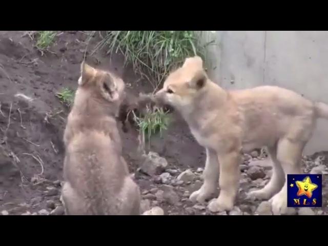 Лесные звери Карточки Домана Голоса животных Развивающие мультфильмы для детей