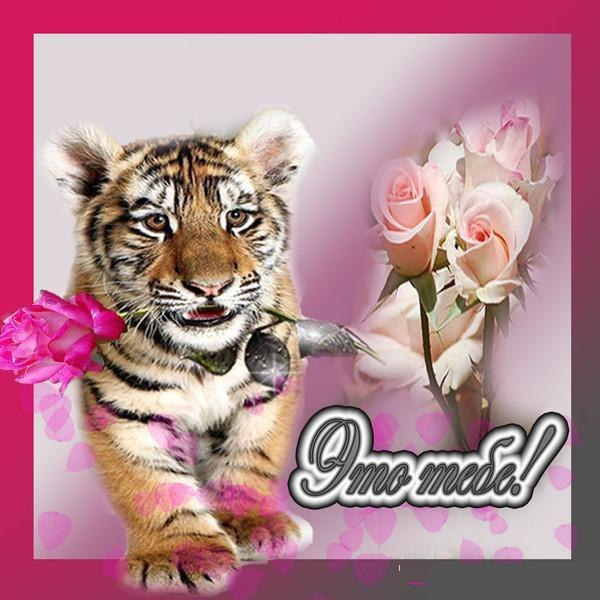открытки с тигром и поздравлением горлышку, сзади основе
