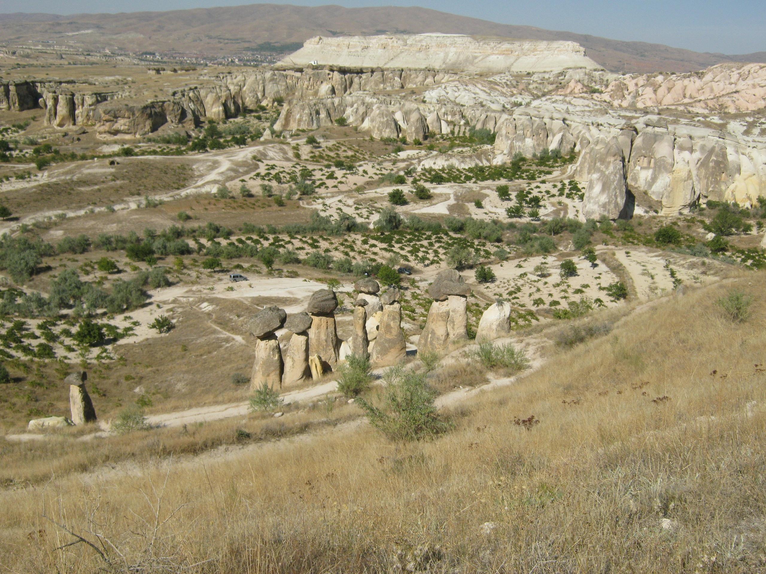 Cappadocia grapes garden