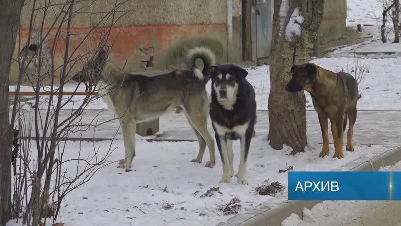 В Березниках начался отлов собак