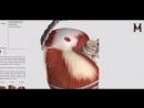Глубокие мышцы груди детальный обзор