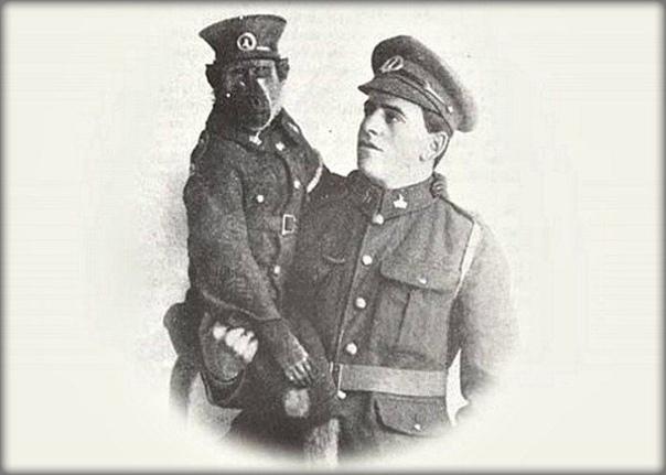 В 1915 году уроженец ЮАР Альберт Марр присягнул на верность Британии и попросил разрешение взять с собой домашнего павиана обезьяну Джеки Так и началась история преданной военной службы храброго