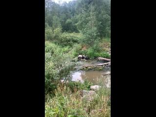 Видео от Julia Gardarika