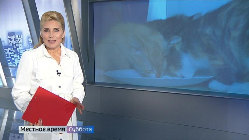 Семья во Владимире приютила 20 котят.mp4