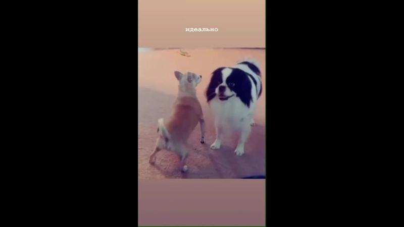 Танец собаки.. | #TikTok (видео приколы)