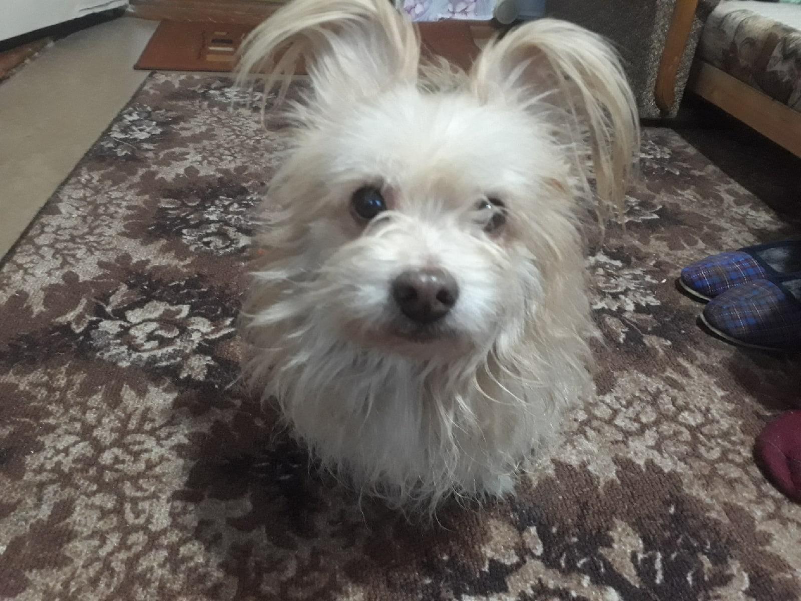 Найдена собака около Коношской стеллы, кобель. Может