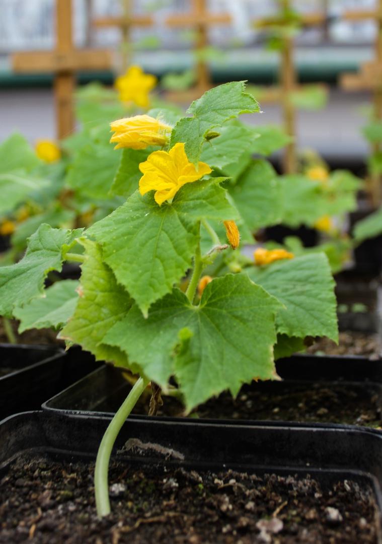 весной в Донецке высадят более 300 тысяч цветов