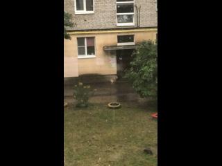 Видео от Кристины Просвирновой