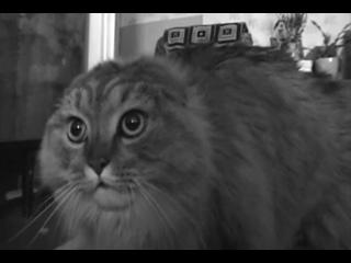 В Перми умер NONONONO Cat — кот-мем по кличке Маркиз