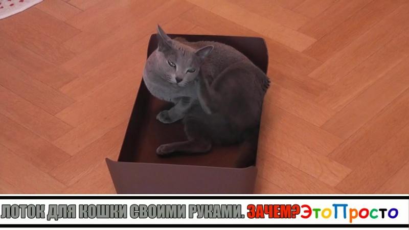 Лоток для кошки или кошачий туалет своими руками