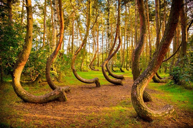 Самые красивые леса нашей планеты., изображение №1