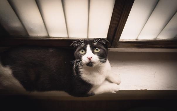Ведьмина кошка С тех пор как у Мурки отнялись задние лапы мороки с ней стало в разы больше. Поначалу мы с мамой радовались, что кошка вообще выжила после прыжка с 8-го этажа, но уже через