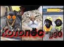 Смешные собаки и котики тик ток 090 Котопёс Приколы 2021, смешные видео, лучшие приколы 2021.