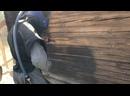Видео от Алексея Павловского