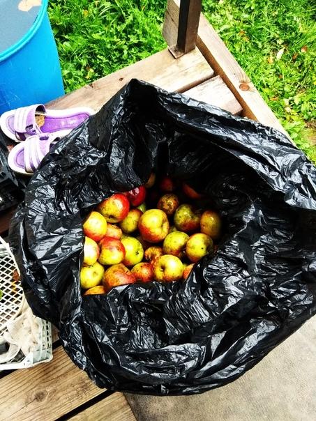 Отдам яблоки. Стояли на улице около недели. Стали ...