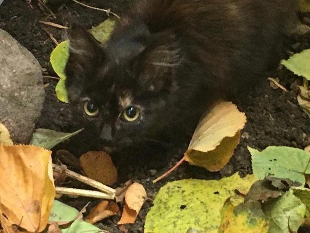 Доброго всем дня !  Найден котёнок в Дудергофе ! Е...