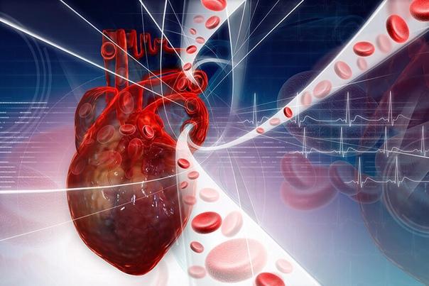 Транс-жиры — истинные виновники развития заболеваний сердца и сосудов