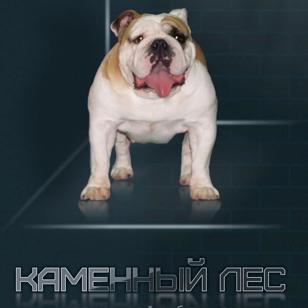 Собака английский бульдог щенок Ростов-на Дону