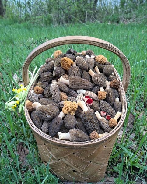 грибы ленинградской области сергей макаренко