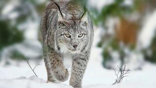 ИЗУЧАЕМ ЖИТЕЛЕЙ ЛЕСА. Лесные животные. Что такое лес?Познавательное видео для детей