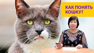 Мимика кошек. Как их понять? Наталья Носова
