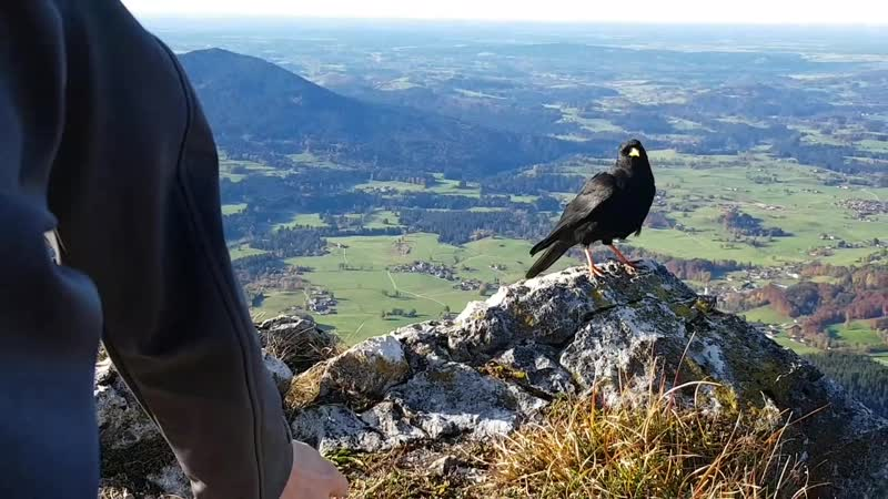 Бавария Альпы Восхождение на Breitenstein