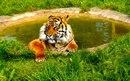 Фотоальбом человека Льва Сафарийского